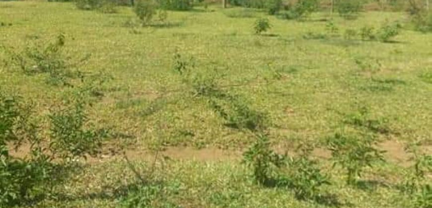 Land for sale in Kisimbiri at 20,000,000