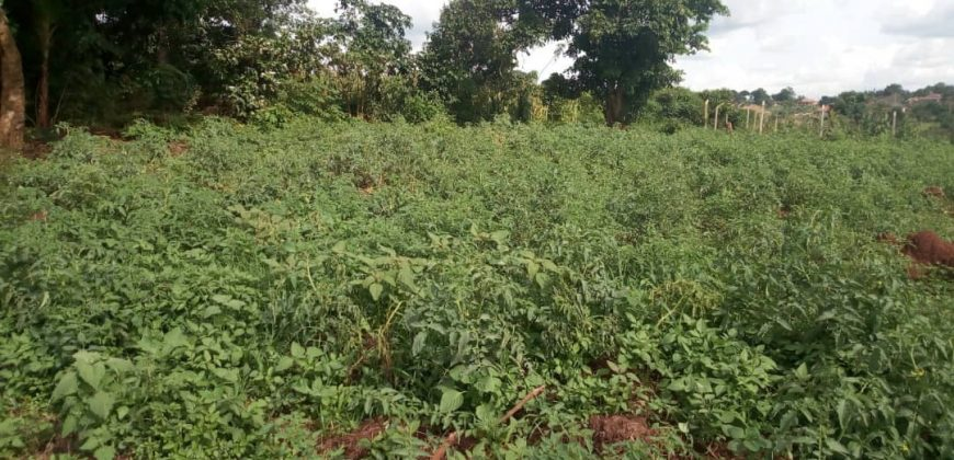 Land for sale in Kitagobwa at 35,000,000
