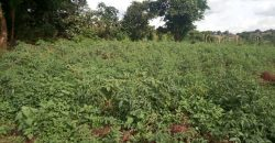 Land for sale in Nakwero Canaan sites at 105,000,000.
