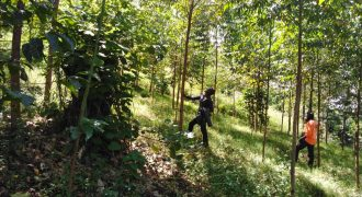 Land for sale in Namagoma at 30,000,000
