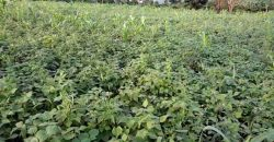 Land for sale in Kyanja at 100,000,000