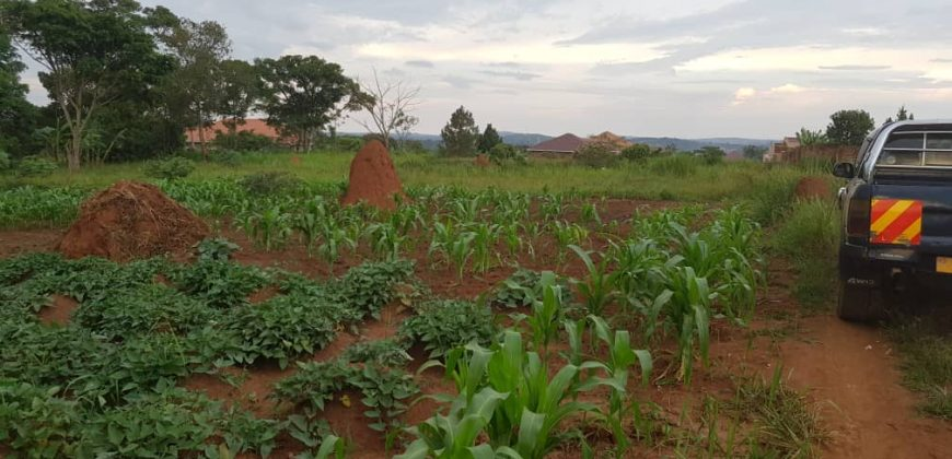 Land for sale at 23,000,000 in Katikamu Mukono.