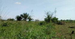 Land for sale in Wakiso at 20,000,000.
