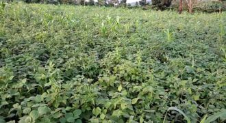 Land for sale in Matugga Mwererwa at 45,000,000