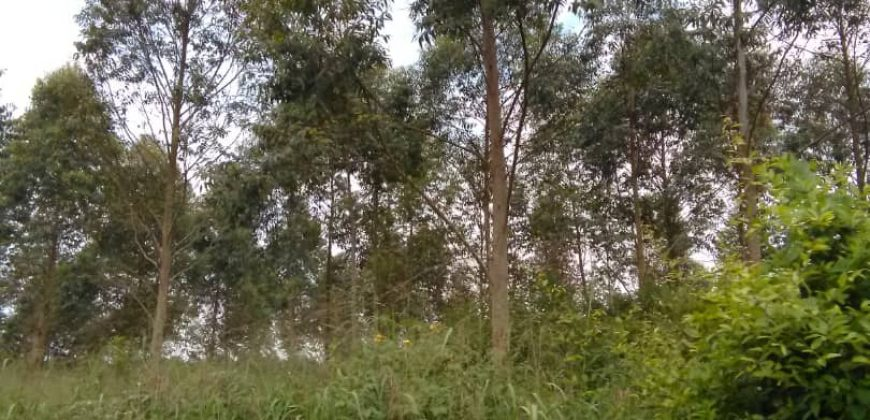 Land for sale in Kapeka at 5,000,000