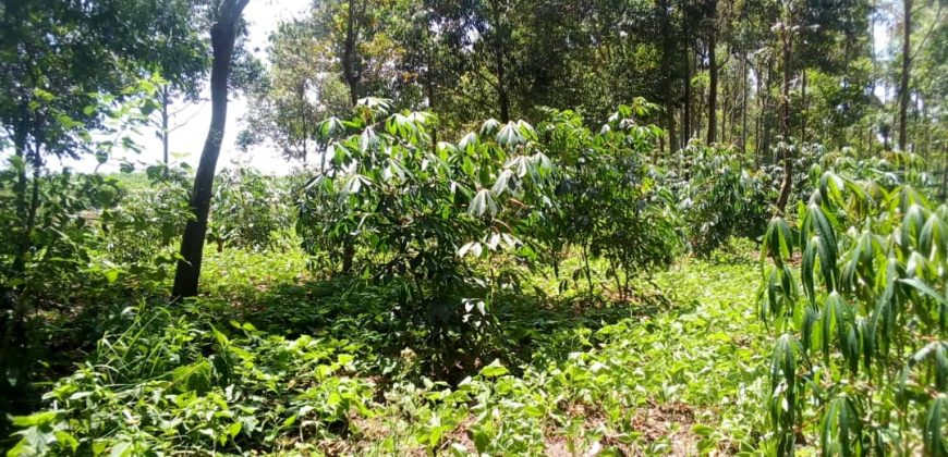 Land for sale on Masaka road at 10,000,000