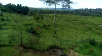 Livestock Farm for Sale in Nkokonjeru Mukono – Shs 450 Million