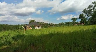 Plot for sale in wakiso at shs 85,000,000