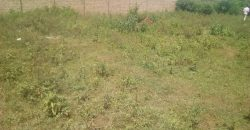 Plot for sale in Gayaza Yoga Chick at 20,000,000