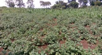 Land for sale in Nakasongola at shs 120,000,000
