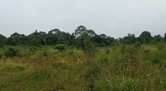 Plot for sale in Kikandago-Bombo at shs 10,000,000