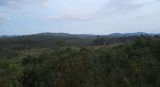 Land for sale in Mpigi at shs 10,000,000