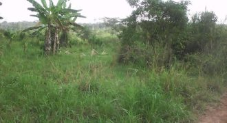 Land for sale in Mityana Kikonge at shs 8,000,000