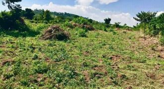 Land for sale in Kasanda Mityana at shs 12,000,000
