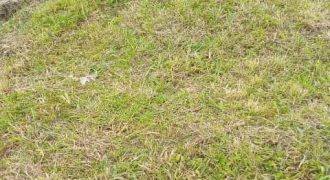 Land for sale in Kalule Bombo at shs 35,000,000