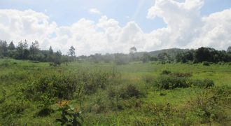 Land for sale in Mityana at shs 200,000,000