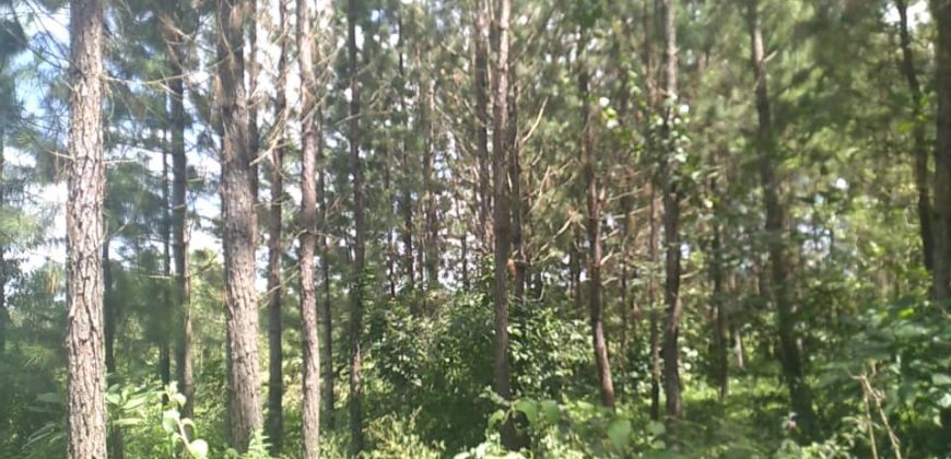Land for sale in Wakiso Busiro at shs 28,000,000