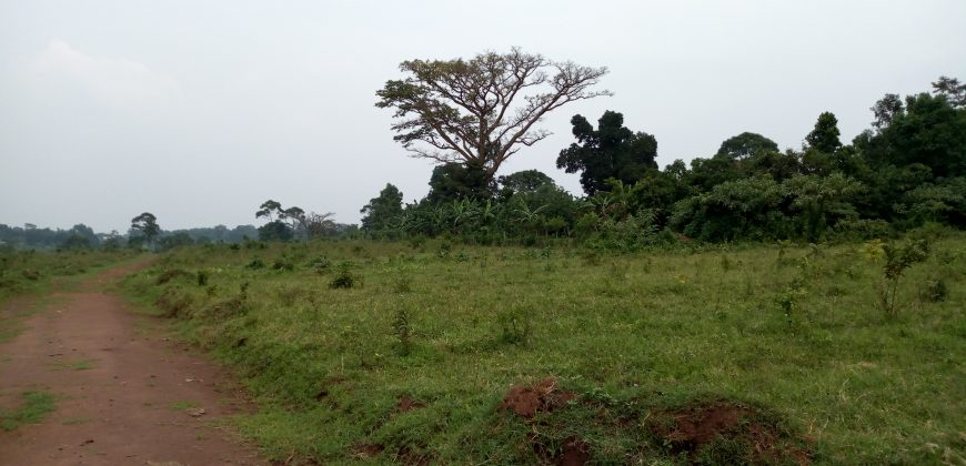Plots for sale in Kisowera Mukono at shs 34,000,000