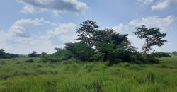 285 Acres of Farm Land for Sale in Luwero