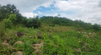 Plots for sale in Busukuma at shs 20,000,000