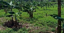 Plots for sale in Nakasajja at shs 34,000,000