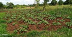 Plots for sale in Mawule at shs 80,000,000