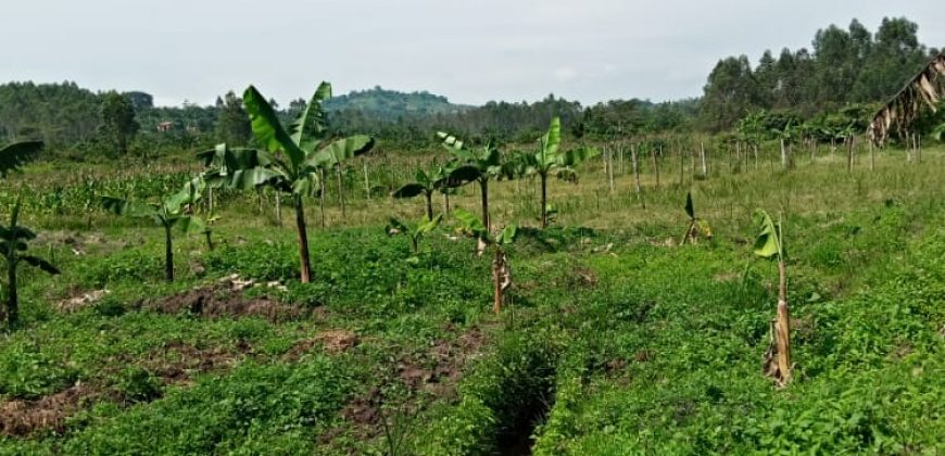 Plots for sale in Kisowera at shs 15,000,000