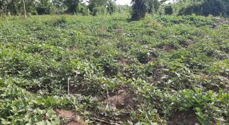 Plots for sale in Wakiso at shs 25,000,000