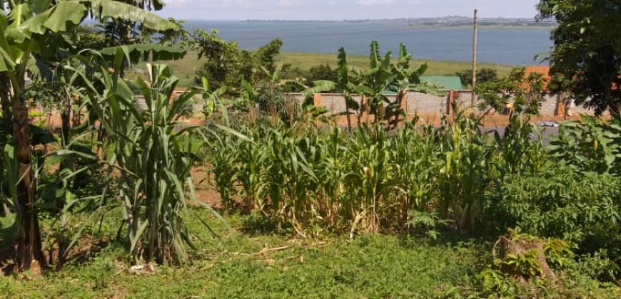 Land for sale in Luweero at shs 4,000,000