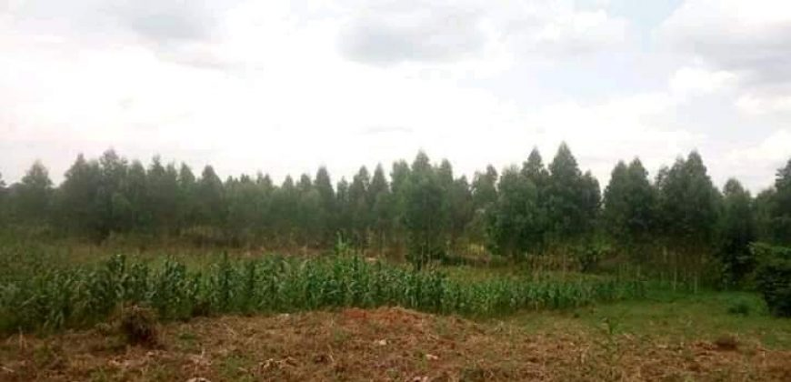 Plots for sale in Luweero at shs 20,000,000