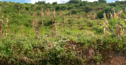 Plot for sale in Nalumunye hill at shs 170,000,000