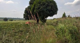 Plots for sale in Zirobwe at shs 10,000,000