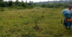 Plots for sale in Mpigi at shs 46,000,000