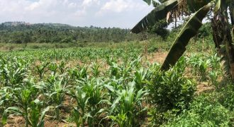 Plots forn sale in Nsaggu at shs 40,000,000