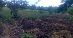 Land on sale in Mitiyana at shs 10,000,000 per acre.