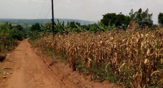 Land for sale in Busunju at shs 16,000,000