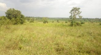 Plots for sale in Mukono Nakifuma at shs 14,000,000