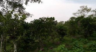 Plots for sale along Masaka road at shs 50,000,000 per acre