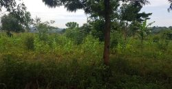 Land on sale in Busukuma at shs 35,000,000