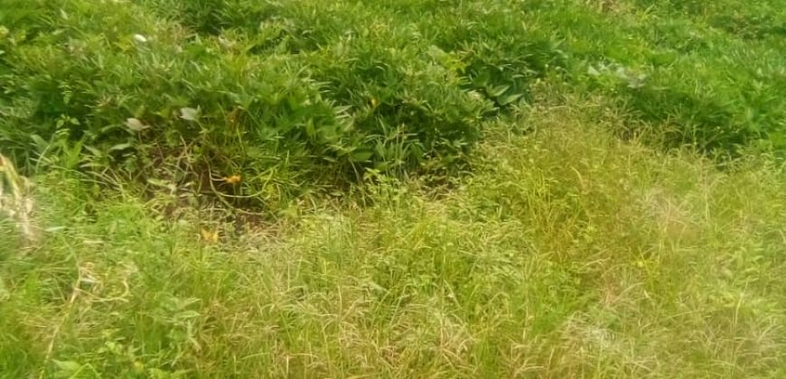 Plots for sale in Mukono at shs 95,000,000