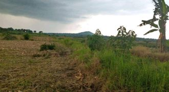 Land for sale in Bombo at shs 10,500,000