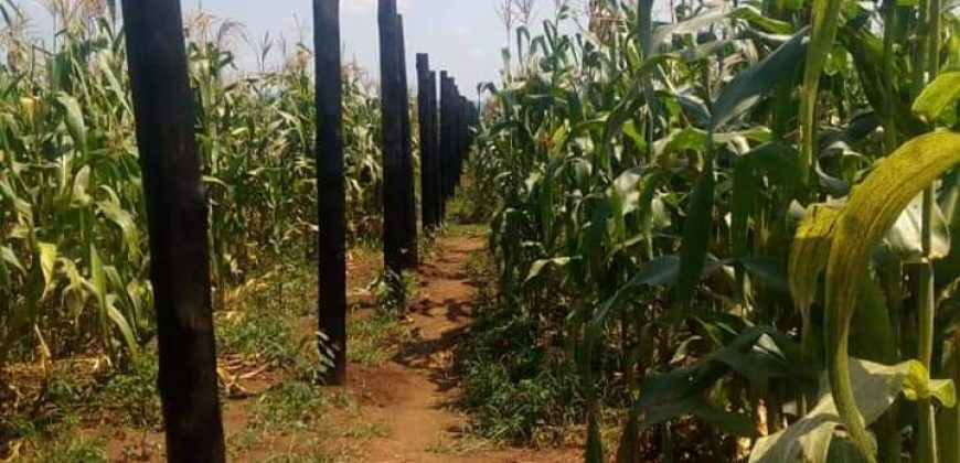 A farm land for sale in Mubende at shs 6,000,000