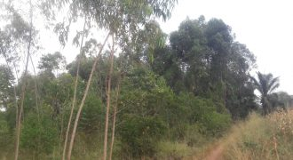 Plots for sale in Namagoma at shs 5,000,000