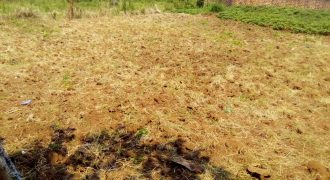 Plot on sale in Kira Shimon at shs 38,000,000