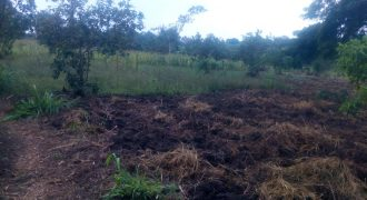 Plots for sale in Masaka Kalisizo town at shs 1,200,000