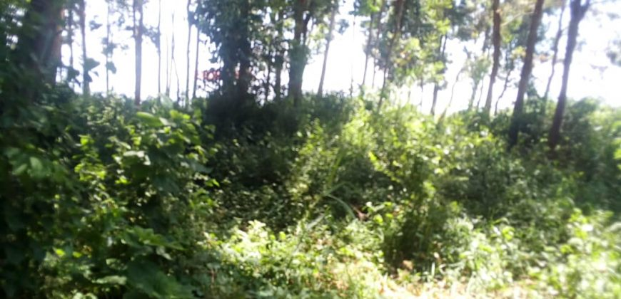 Plots for sale along Masaka road at shs 10,000,0000