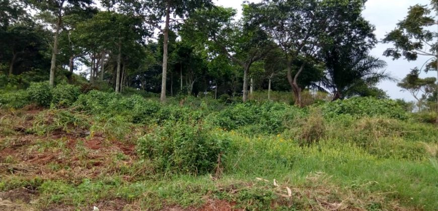 Plots for sale in Migade Bombo at shs 20,000,000