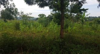 Farmland for sale in Kamira Kikyusa at shs 3,000,000