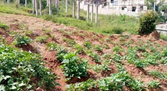 Plots for sale in Ntinda Ministers village at shs 650,000,000