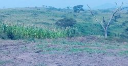Plots for sale in Mukono Kyetume at shs 16,000,000